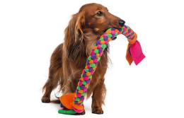 Kuidas koerale sobivat mänguasja valida?