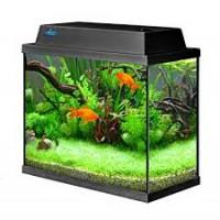 Akvaariumid ja alused