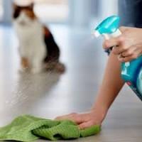 Lõhna- ja plekieemaldus