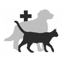 Veterinaaria (koer)