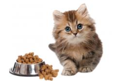 Kuidas kassile kuivtoitu valida?