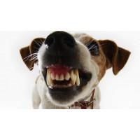 Stressi vastased vahendid koertele